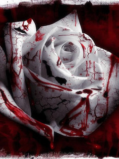 Blood of rose